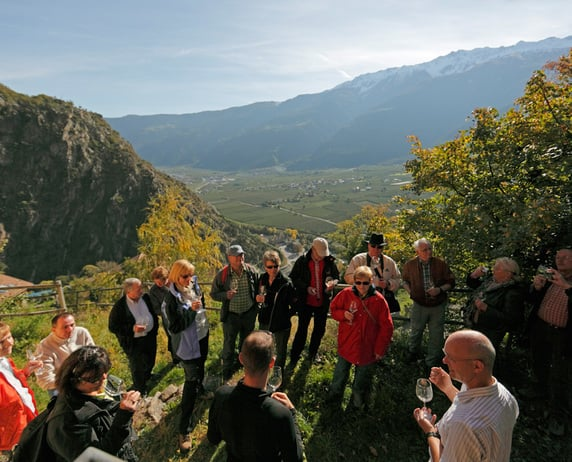 Guided tours in the estate and Wine Tasting